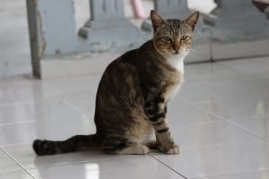 domestic-cat-1443408-m