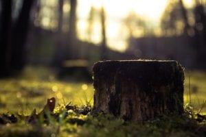 Odstranění pařezů ze zahrady