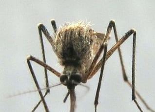 Komáří štípnutí a svědění