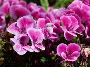 flowers-177392_1920