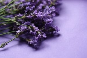 lavender-1491614_960_720